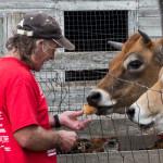 Don feeding a cow