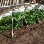 hoop garden