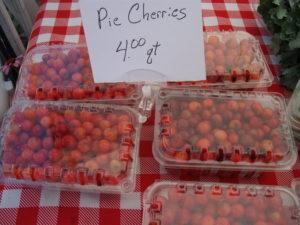 Pie cherries at the market