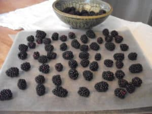Blackberries on tray ready for freezer