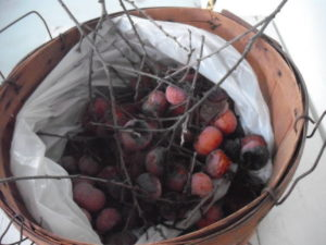 Ripe persimmons in a basket
