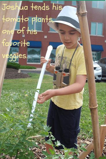 Joshua tending his tomato plant