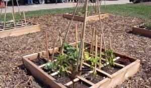 square foot gardens grown by Market Sprouts