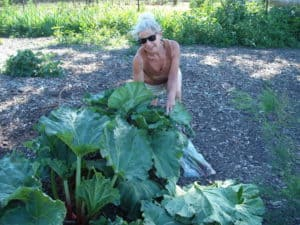 me picking rhubarb at Biver Farm