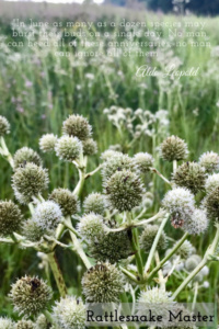 Leopold quote on photo of Rattlesnake Master plant