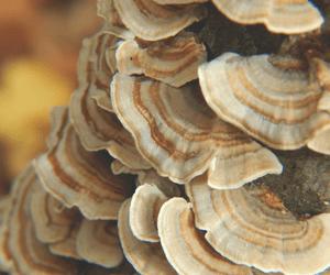 Delicious Living Magazine photo of mushrooms
