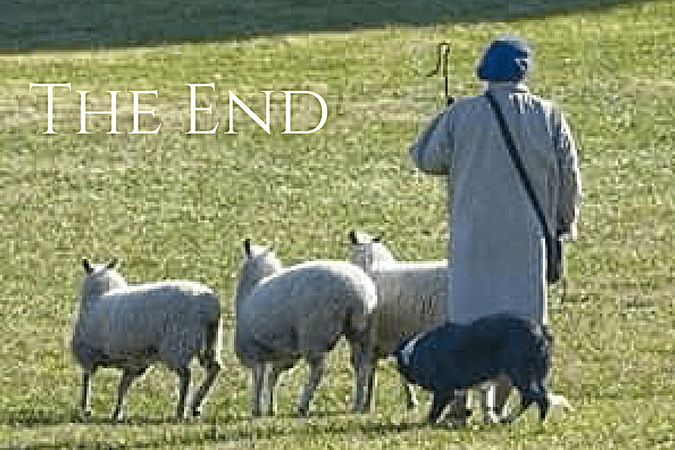 Steve with sheep and dog in pasture