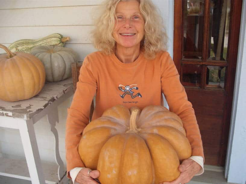 I am holding a large fairy tale heirloom pumpkin