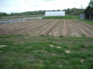 land in production for vegetable crops