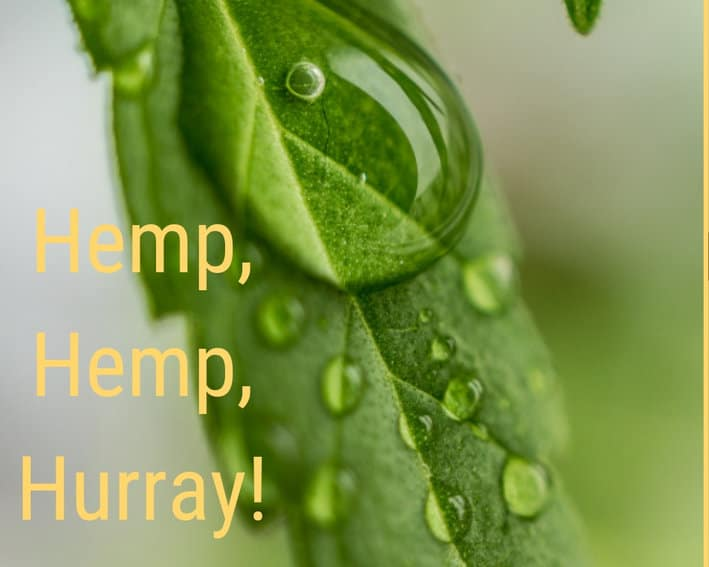 Hemp: The Earth Day (Every Day) Superstar