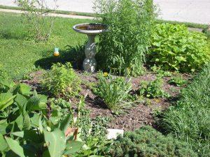 my front yard pollinator garden