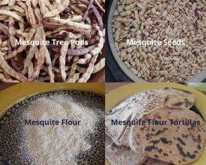 four-square photo of mesquite pods, seeds, flour and final tortillas