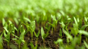 seedlings image from Delicious Living Magazine