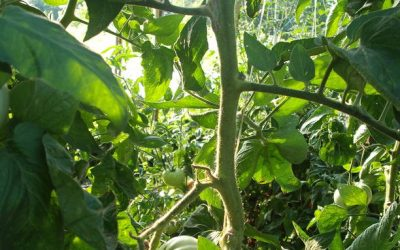 The Family Garden: Where Everything Is in Tune with Nature