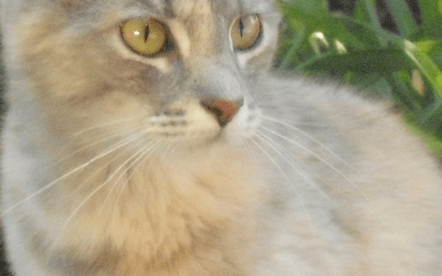 The Tale of Miss Hissy and Her Three Little Kittens