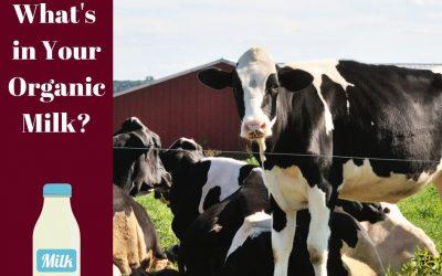 The Udderly Complex Situation of USDA Organic Milk