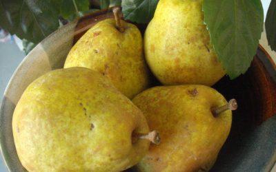 Vanilla Spiced Pear Muffins